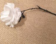 Flower - White Rose